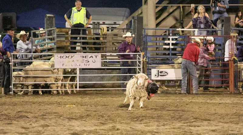 Mutton Bustin At The Senior Pro Rodeo Aug 13