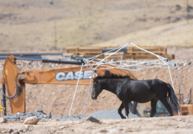With horses facing summer heat and an uncertain future, Tahoe-Reno Industrial Center companies create new water sources
